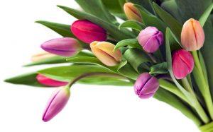 Клининговая компания CleanHouse поздравляет Вас с 8 марта